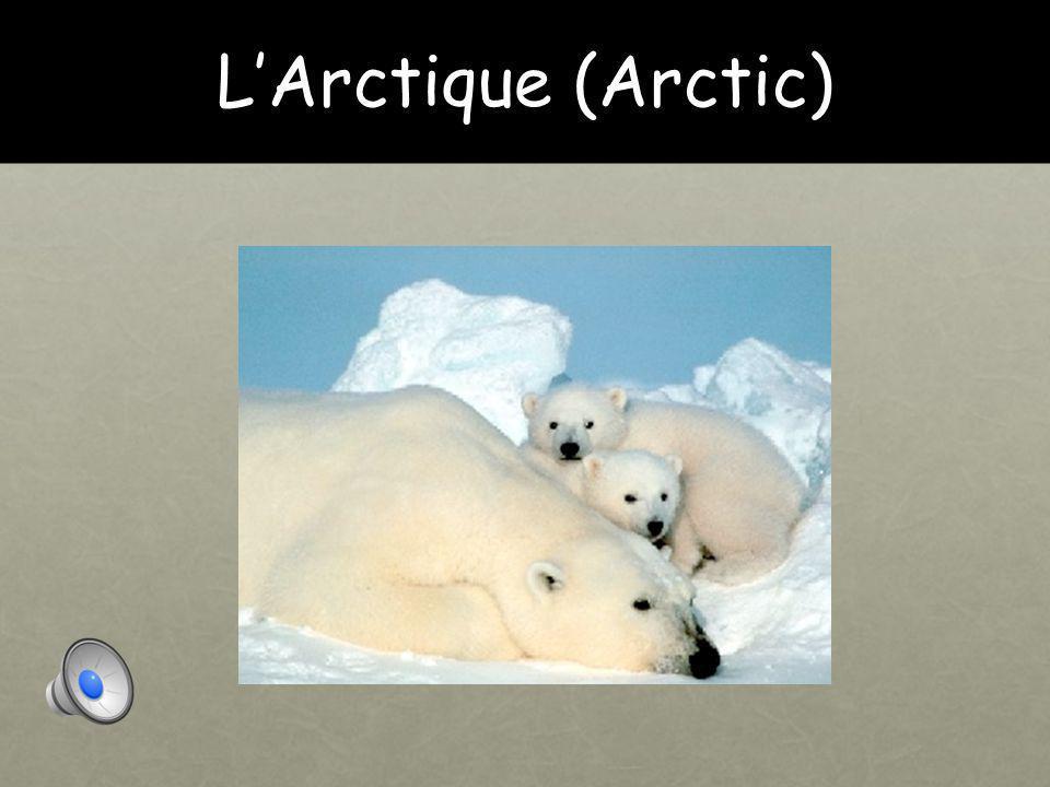 L'Arctique (Arctic)