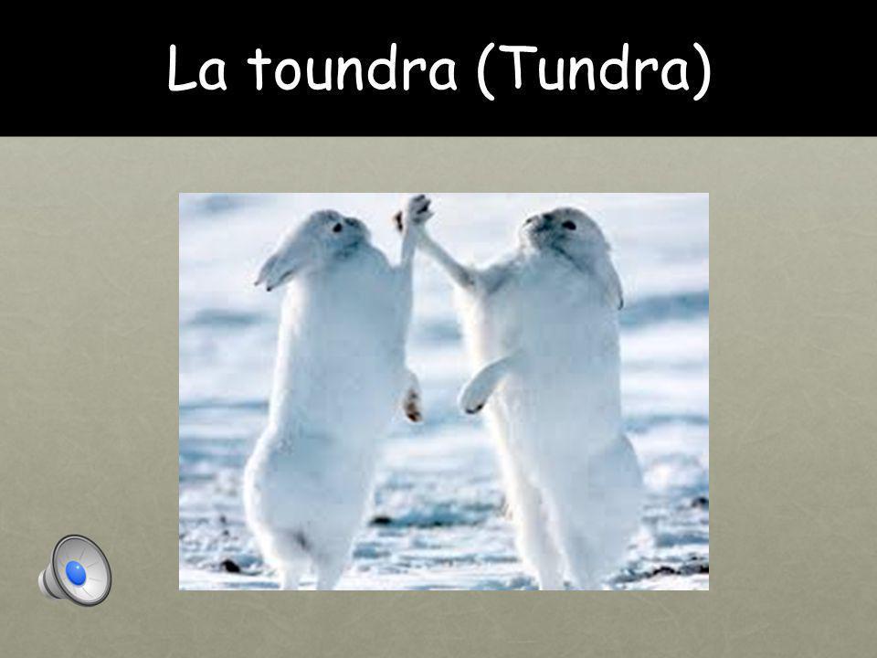La toundra (Tundra)