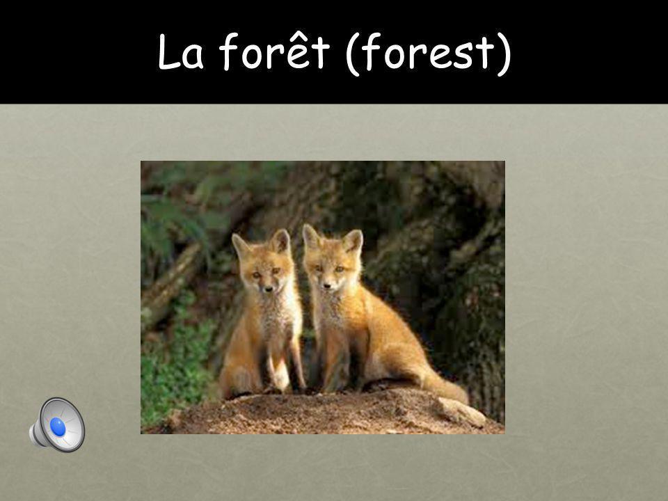 La forêt (forest)