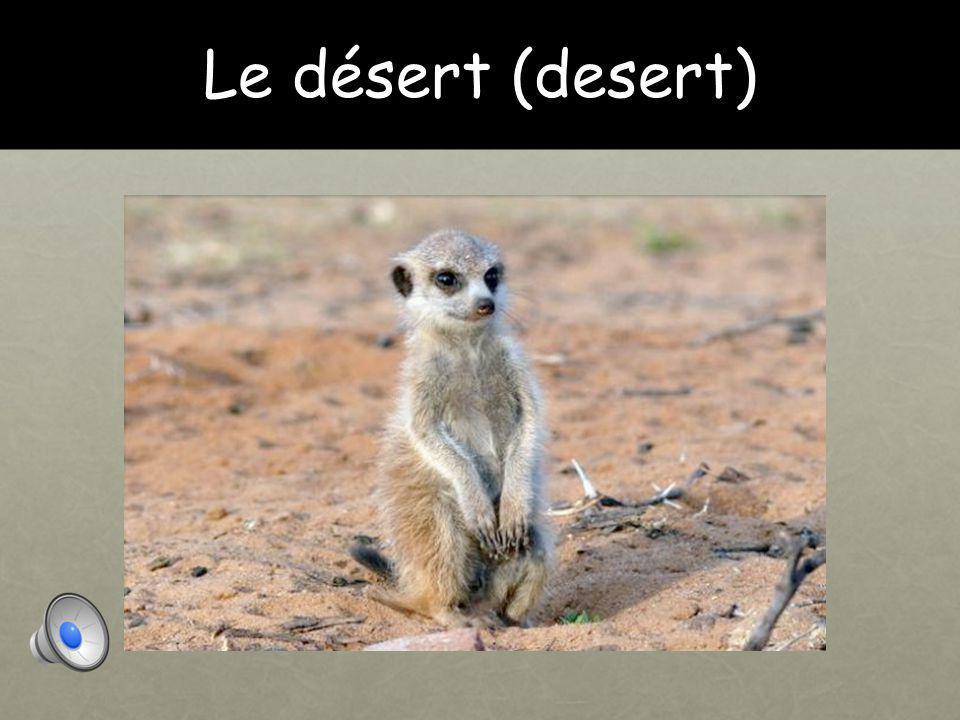 Le désert (desert)