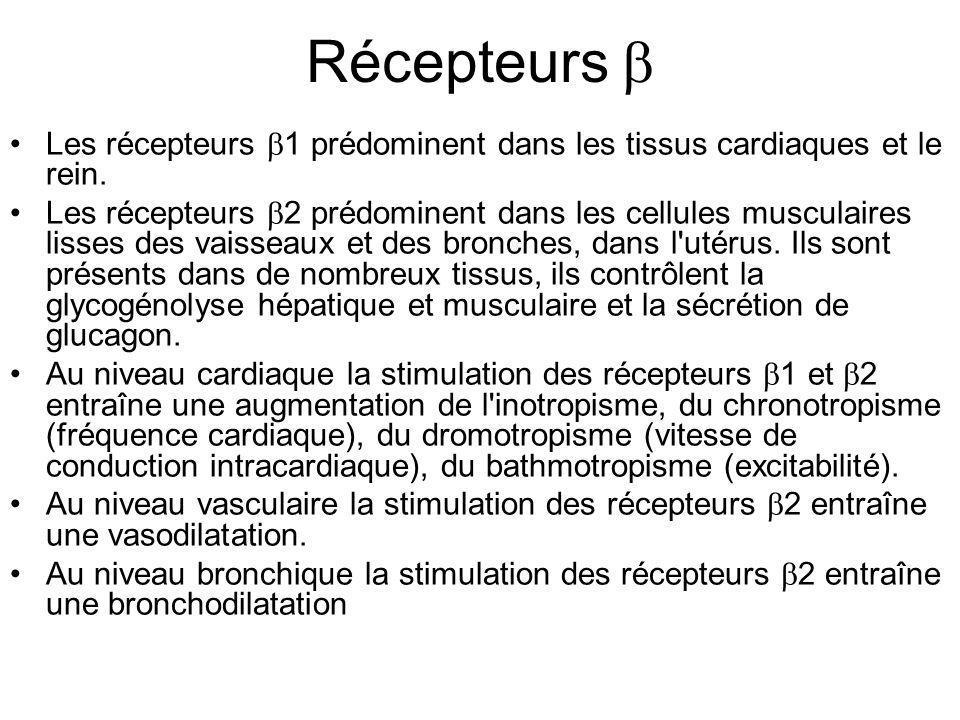 Récepteurs  Les récepteurs 1 prédominent dans les tissus cardiaques et le rein.