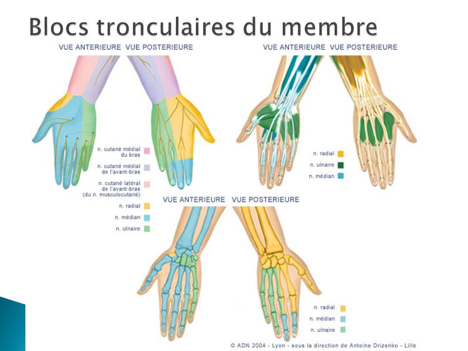 Blocs tronculaires du membre supérieursupérieur