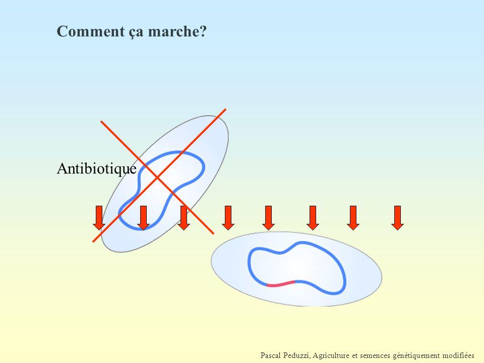 Comment ça marche Antibiotique