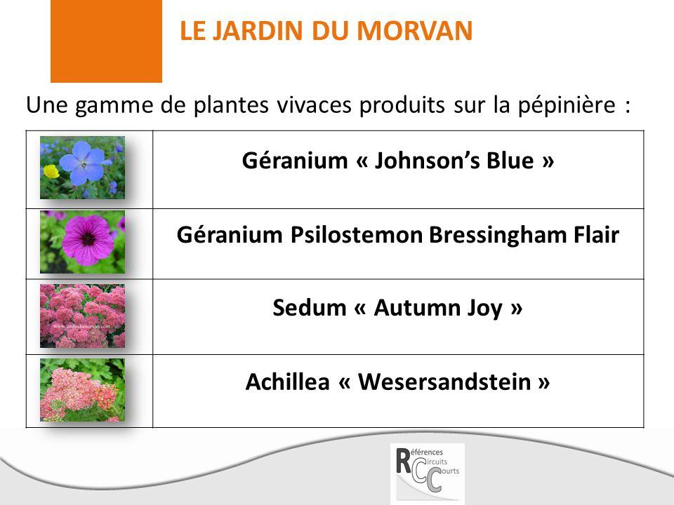 LE JARDIN DU MORVAN Géranium « Johnson's Blue »