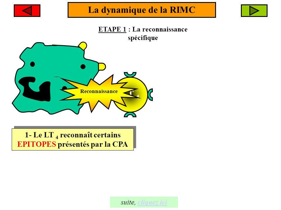 La dynamique de la RIMC LT 4