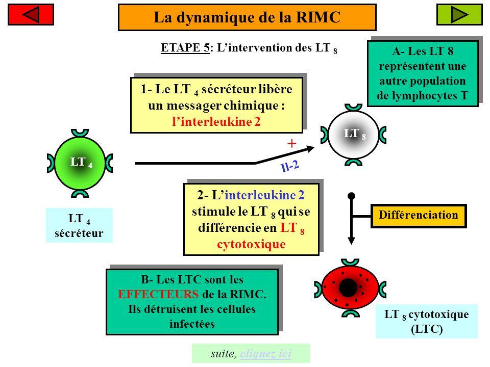 La dynamique de la RIMC +
