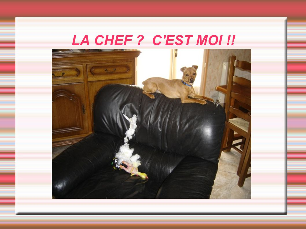 LA CHEF C EST MOI !!