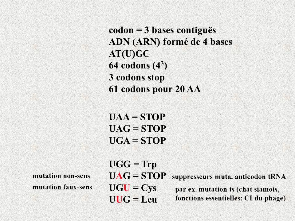 codon = 3 bases contiguës ADN (ARN) formé de 4 bases AT(U)GC