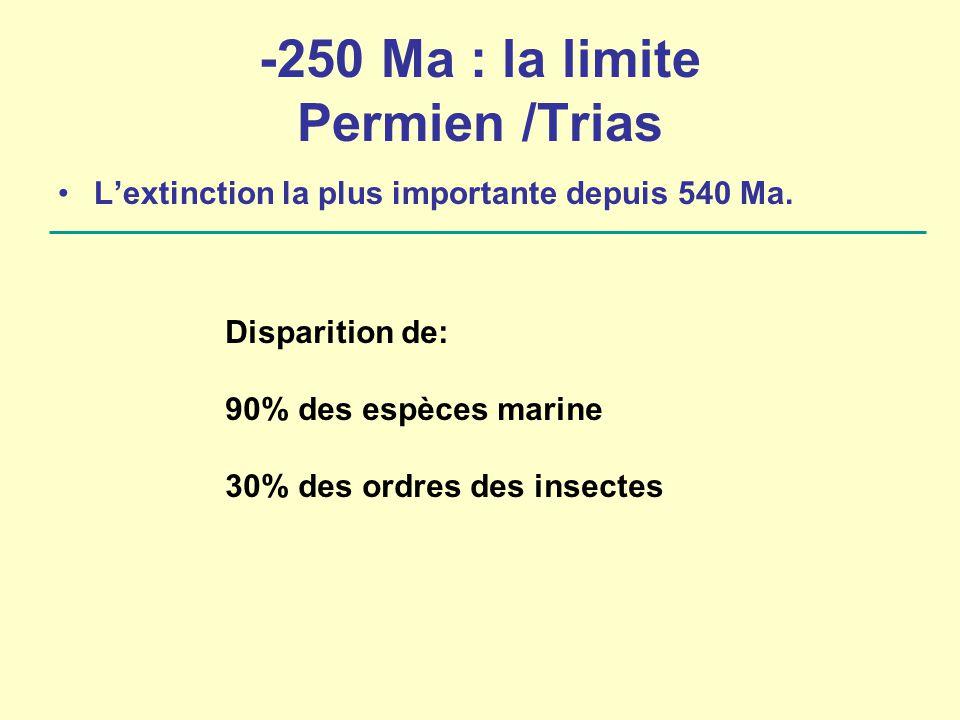 -250 Ma : la limite Permien /Trias
