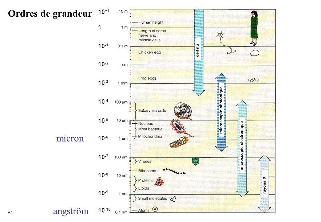 Ordres de grandeur micron angström 1 10+1 10-1 10-2 10-3 10-4 10-5