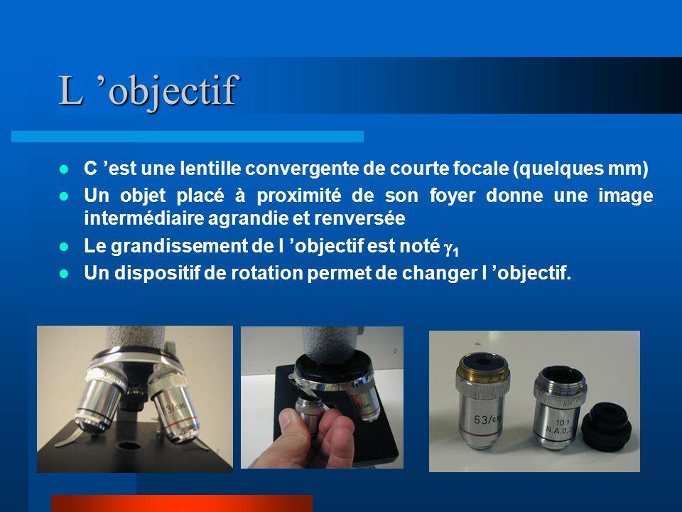 L 'objectif C 'est une lentille convergente de courte focale (quelques mm)