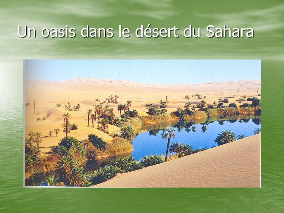 Un oasis dans le désert du Sahara