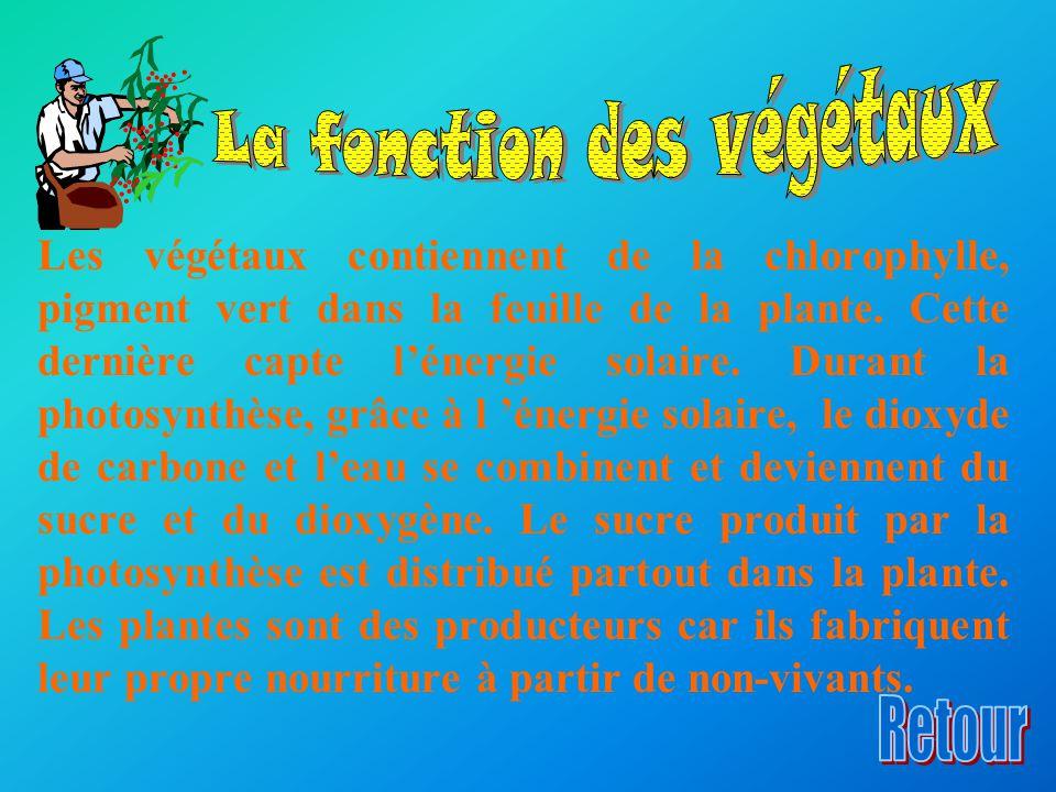 La fonction des végétaux