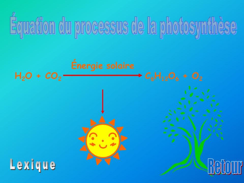 Équation du processus de la photosynthèse