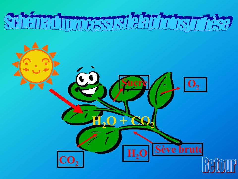 Schéma du processus de la photosynthèse