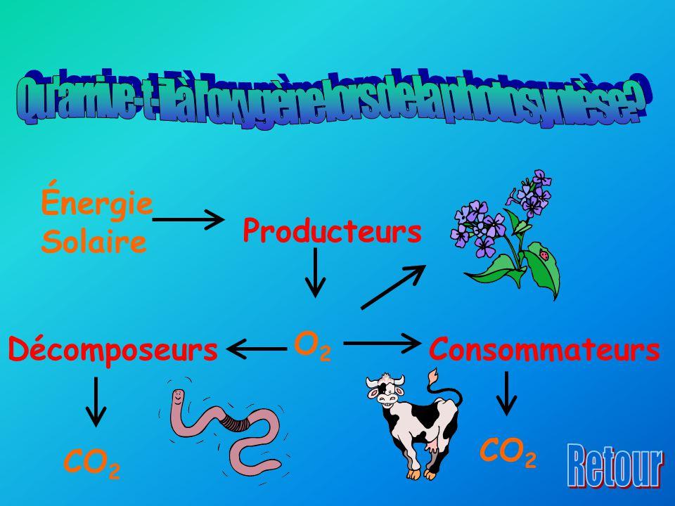 Qu arrive-t-il à l oxygène lors de la photosyntèse