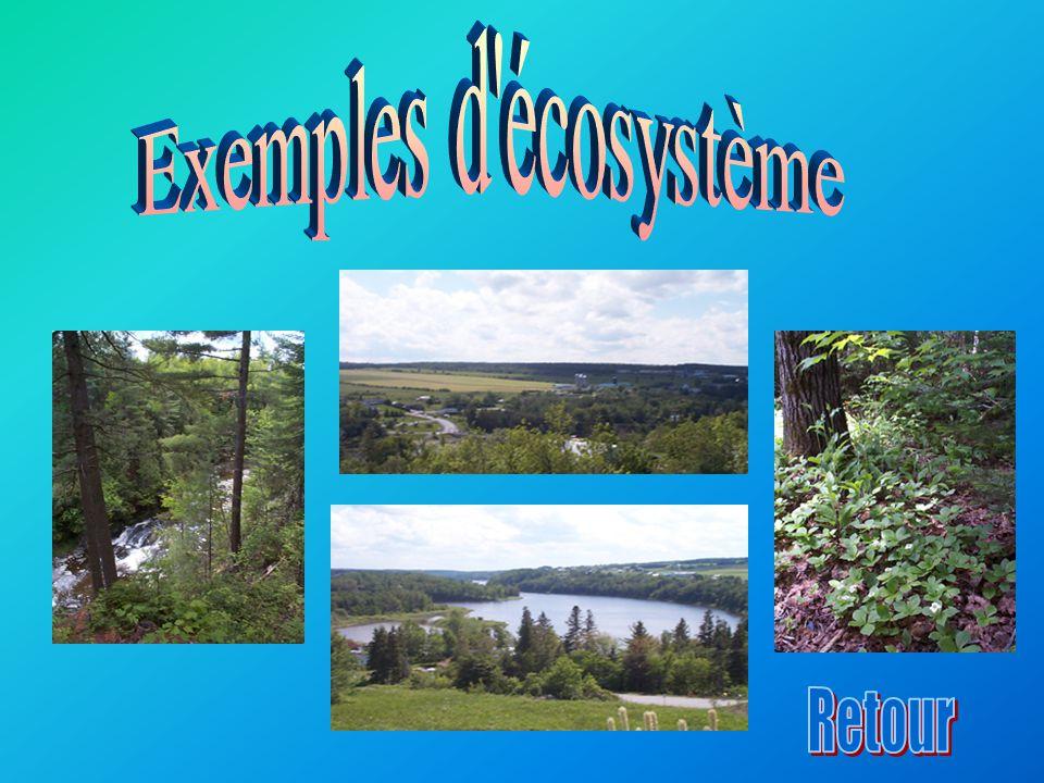 Exemples d écosystème Retour