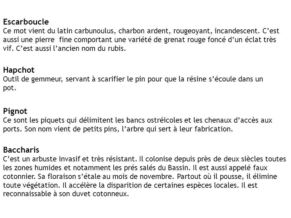Escarboucle Hapchot Pignot Baccharis