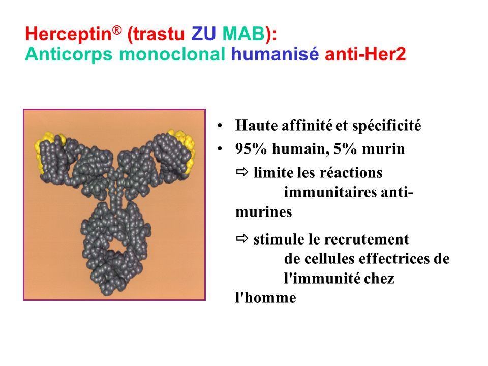 Herceptin® (trastu ZU MAB): Anticorps monoclonal humanisé anti-Her2