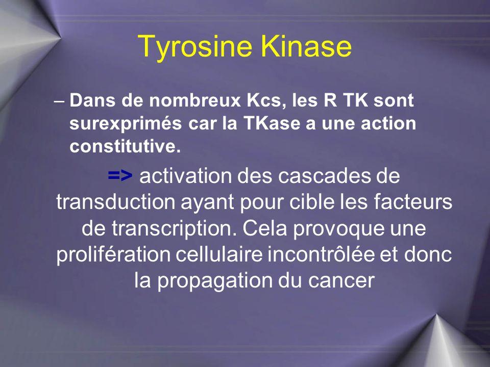 Tyrosine Kinase Dans de nombreux Kcs, les R TK sont surexprimés car la TKase a une action constitutive.
