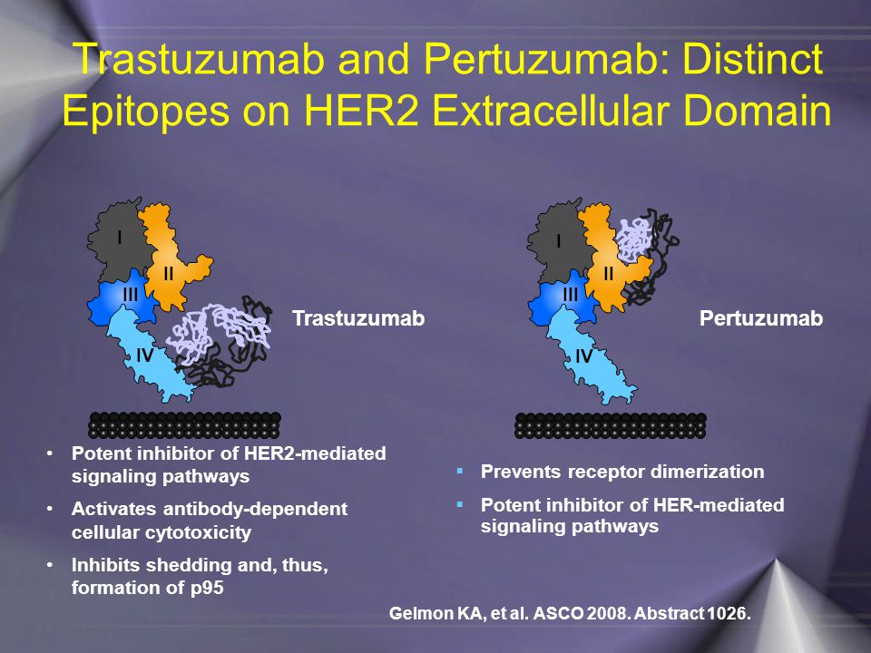 Trastuzumab and Pertuzumab: Distinct Epitopes on HER2 Extracellular Domain
