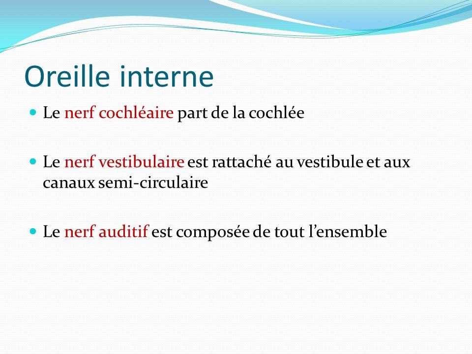 Oreille interne Le nerf cochléaire part de la cochlée