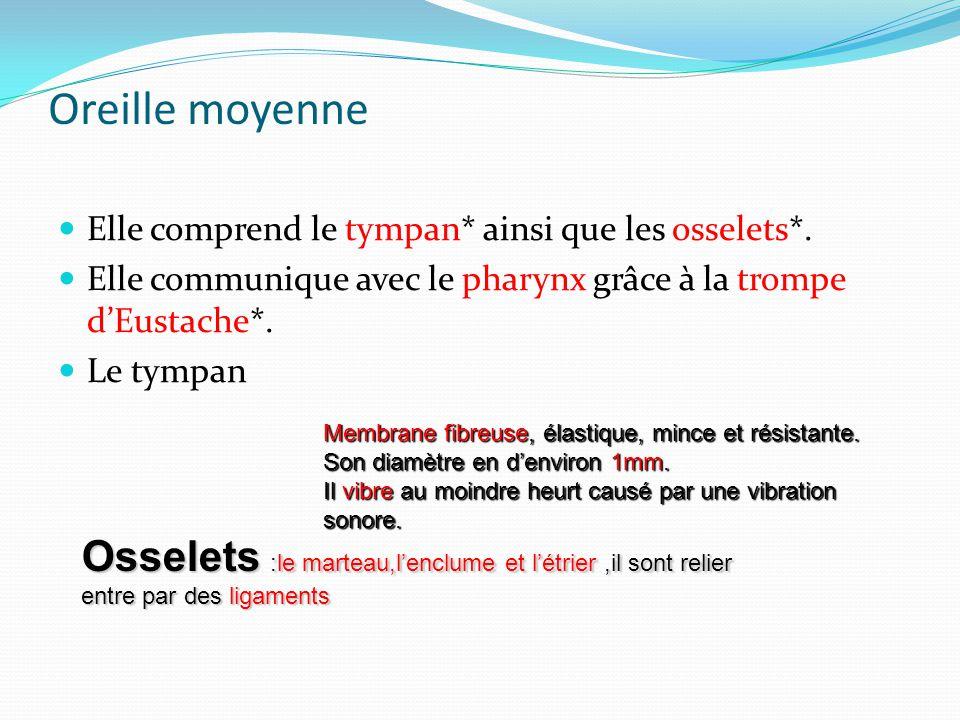 Oreille moyenne Elle comprend le tympan* ainsi que les osselets*. Elle communique avec le pharynx grâce à la trompe d'Eustache*.