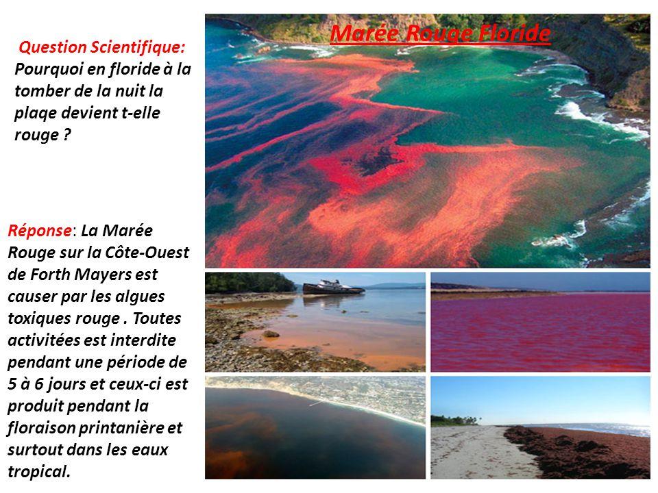 Marée Rouge Floride Question Scientifique: Pourquoi en floride à la tomber de la nuit la plaqe devient t-elle rouge