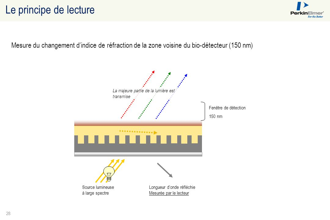 Le principe de lecture Mesure du changement d'indice de réfraction de la zone voisine du bio-détecteur (150 nm)