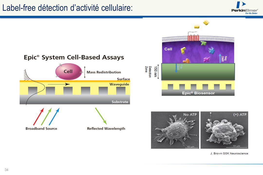 Label-free détection d'activité cellulaire: