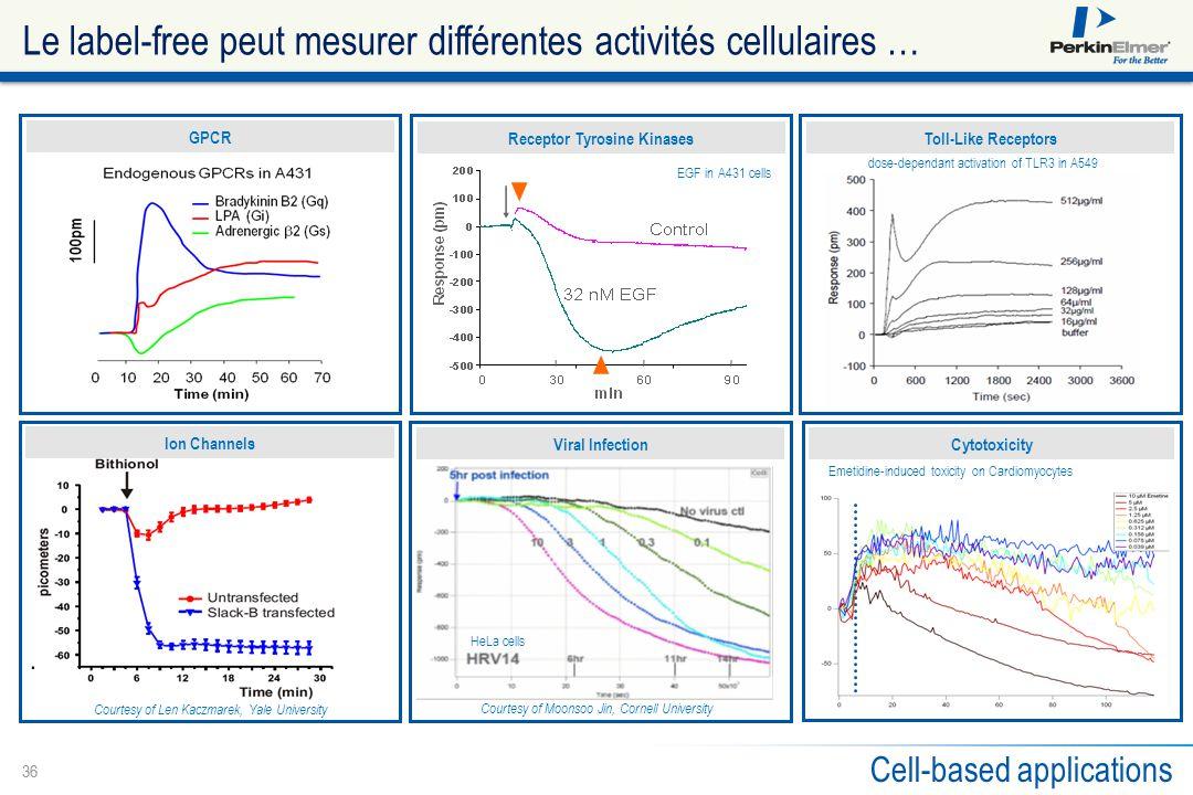 Le label-free peut mesurer différentes activités cellulaires …