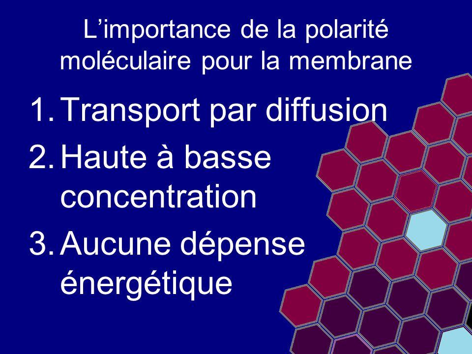 L'importance de la polarité moléculaire pour la membrane