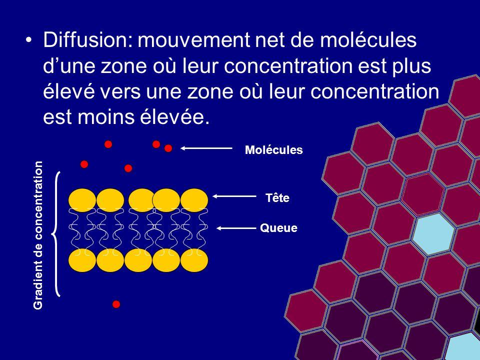 Diffusion: mouvement net de molécules d'une zone où leur concentration est plus élevé vers une zone où leur concentration est moins élevée.