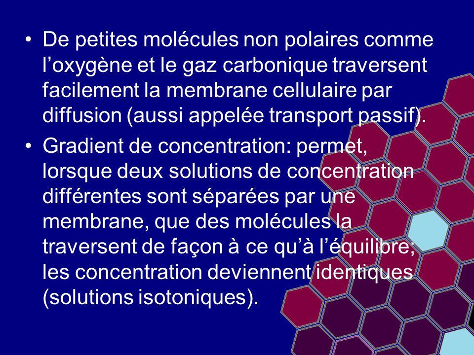 De petites molécules non polaires comme l'oxygène et le gaz carbonique traversent facilement la membrane cellulaire par diffusion (aussi appelée transport passif).
