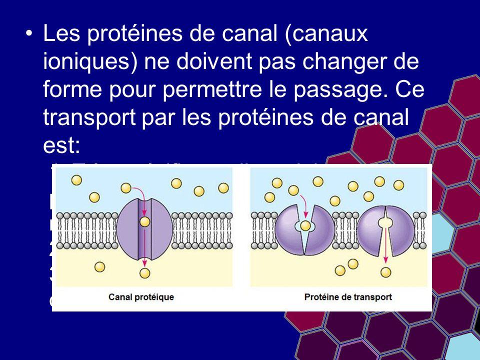 Les protéines de canal (canaux ioniques) ne doivent pas changer de forme pour permettre le passage. Ce transport par les protéines de canal est: