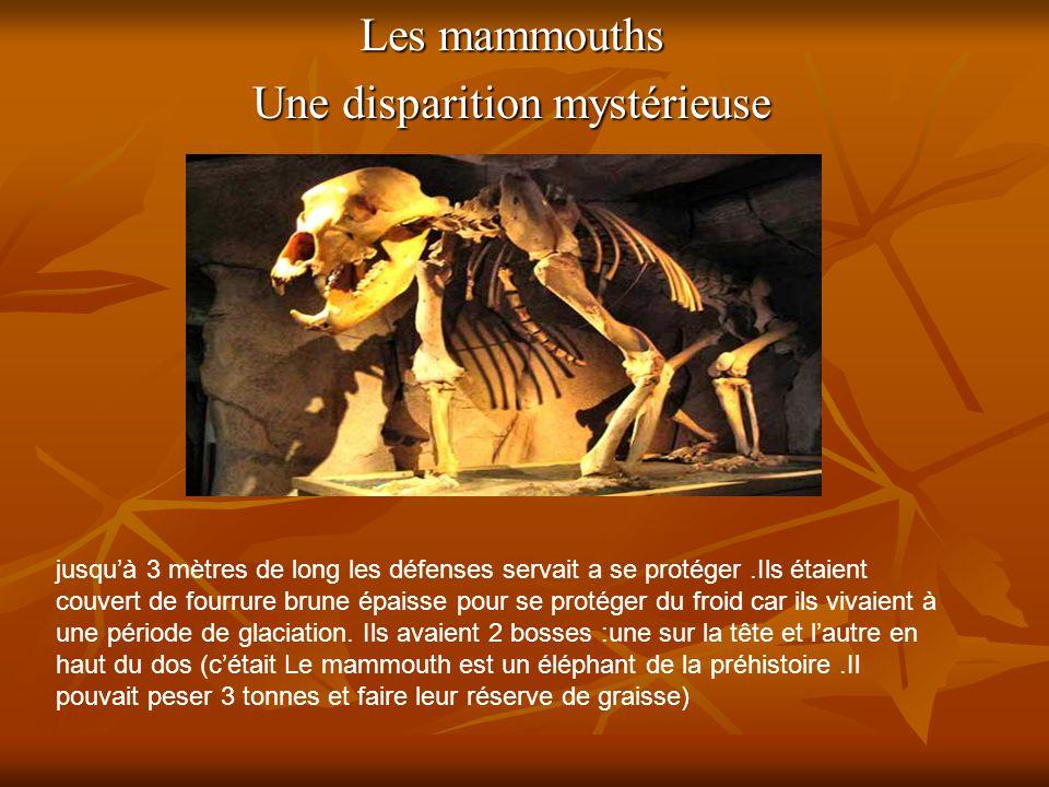 Les mammouths Une disparition mystérieuse