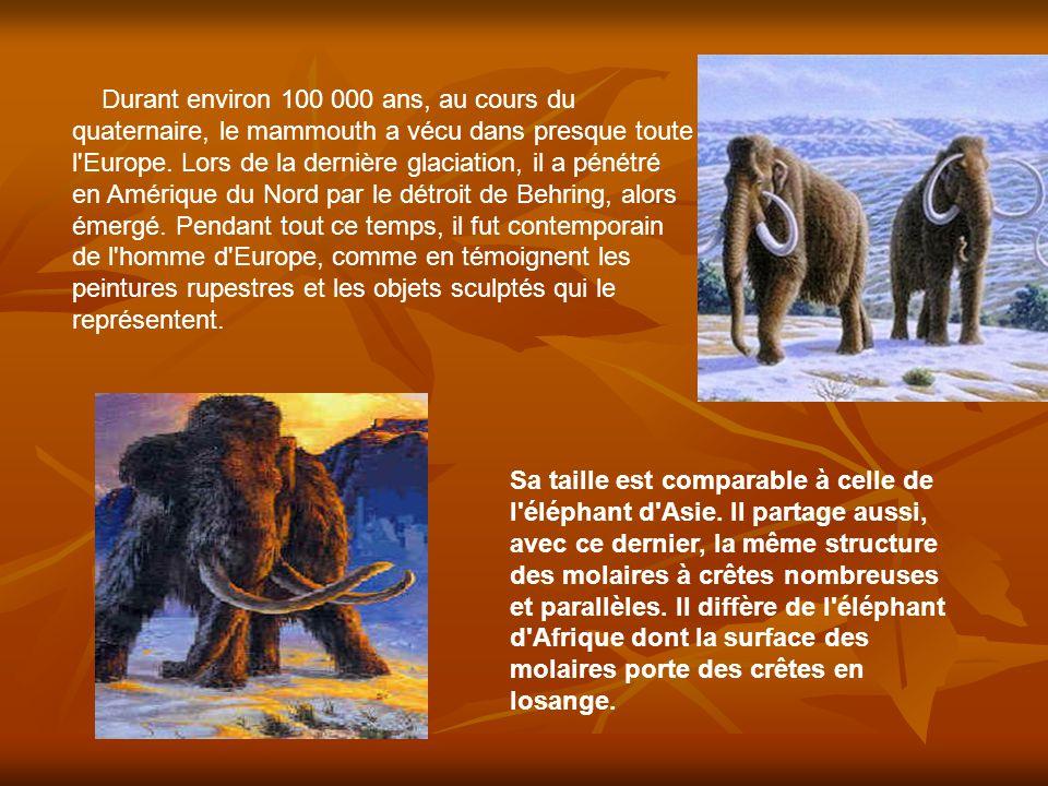 Durant environ 100 000 ans, au cours du quaternaire, le mammouth a vécu dans presque toute l Europe. Lors de la dernière glaciation, il a pénétré en Amérique du Nord par le détroit de Behring, alors émergé. Pendant tout ce temps, il fut contemporain de l homme d Europe, comme en témoignent les peintures rupestres et les objets sculptés qui le représentent.