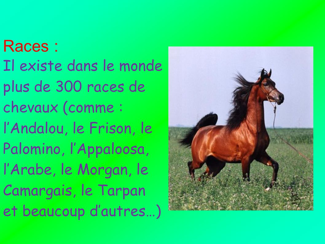 Races :