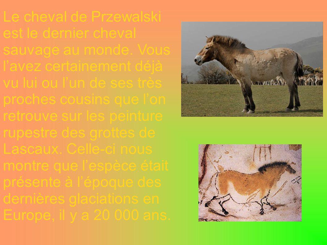 Le cheval de Przewalski est le dernier cheval sauvage au monde