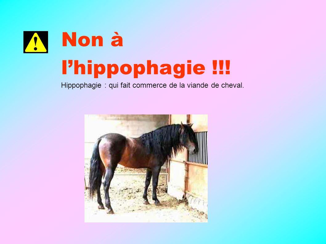 Non à l'hippophagie !!! Hippophagie : qui fait commerce de la viande de cheval.