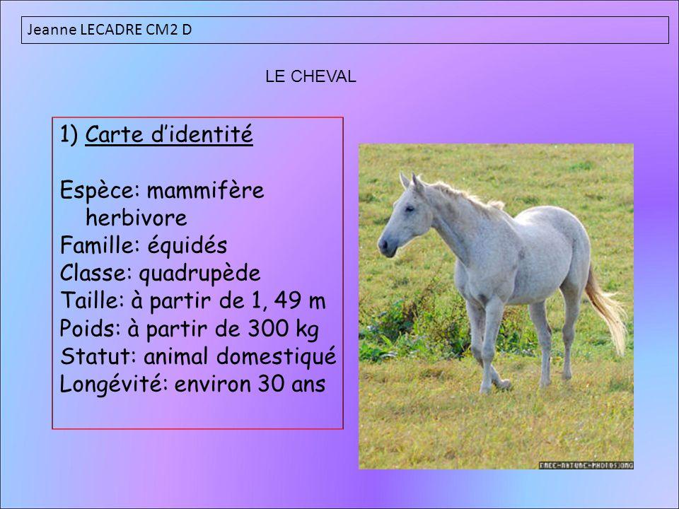 Espèce: mammifère herbivore Famille: équidés Classe: quadrupède