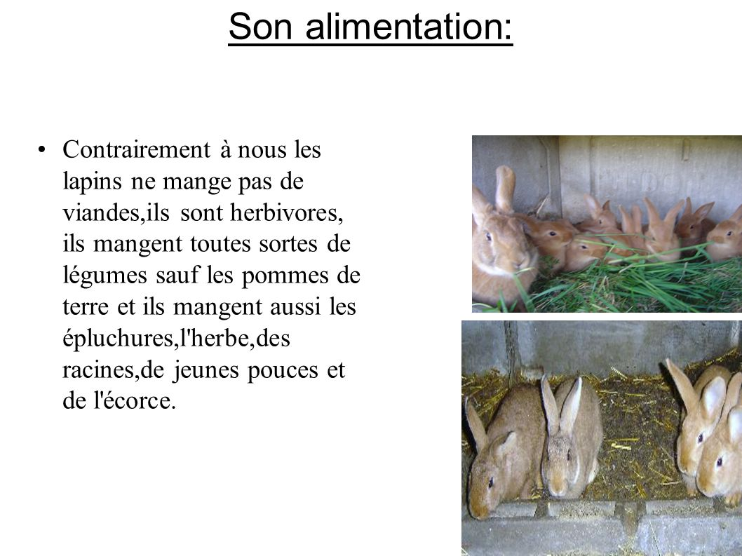 Son alimentation: