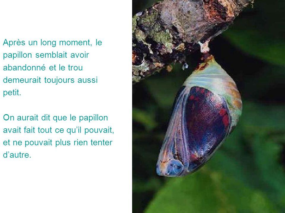 Après un long moment, le papillon semblait avoir. abandonné et le trou. demeurait toujours aussi.