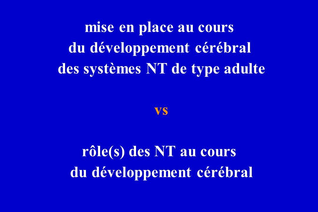 du développement cérébral des systèmes NT de type adulte