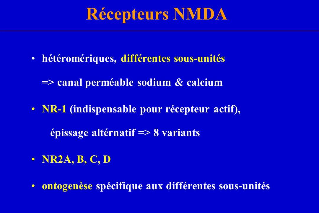 Récepteurs NMDA hétéromériques, différentes sous-unités => canal perméable sodium & calcium.