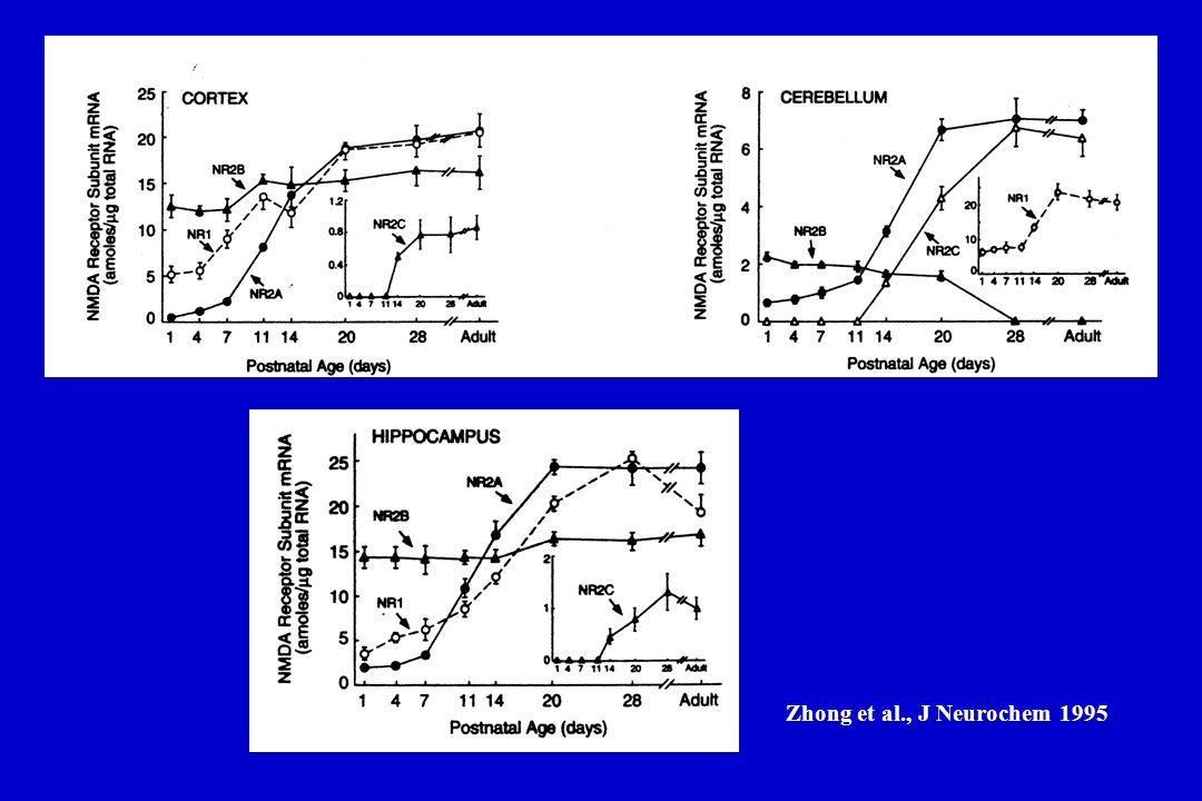 Zhong et al., J Neurochem 1995