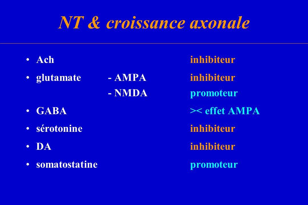 NT & croissance axonale