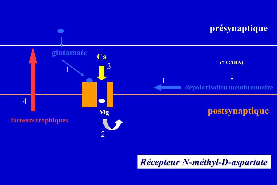Récepteur N-méthyl-D-aspartate