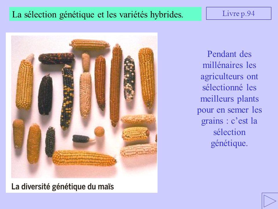 La sélection génétique et les variétés hybrides.