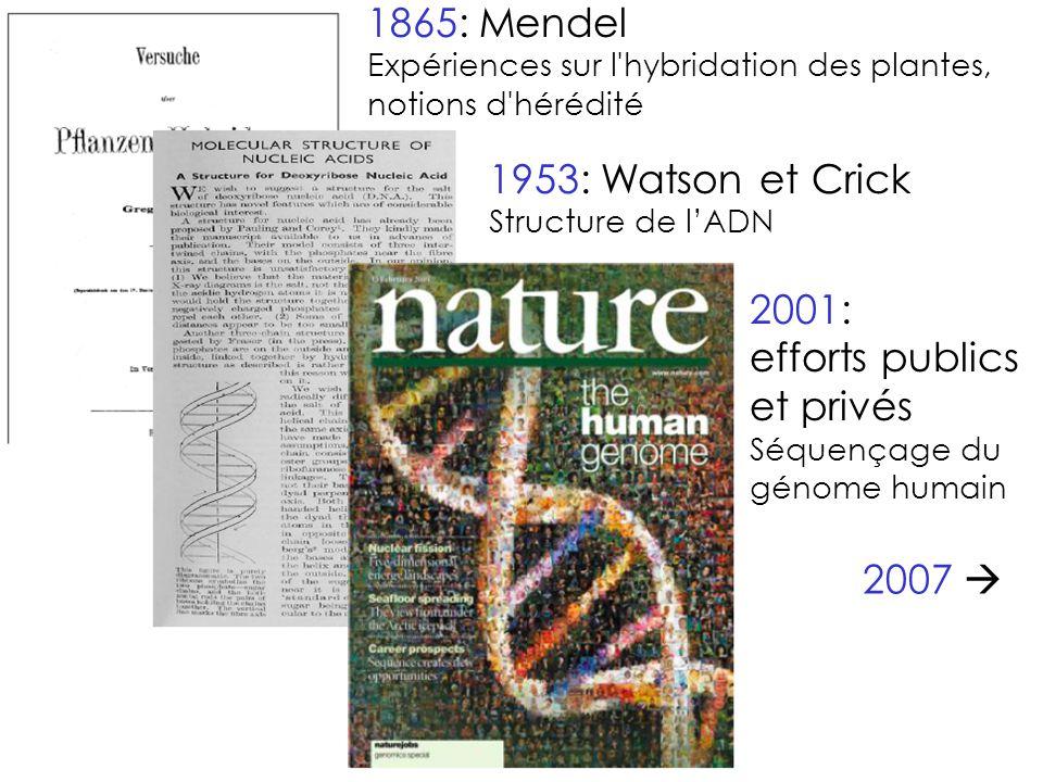 1865: Mendel 1953: Watson et Crick 2001: efforts publics et privés
